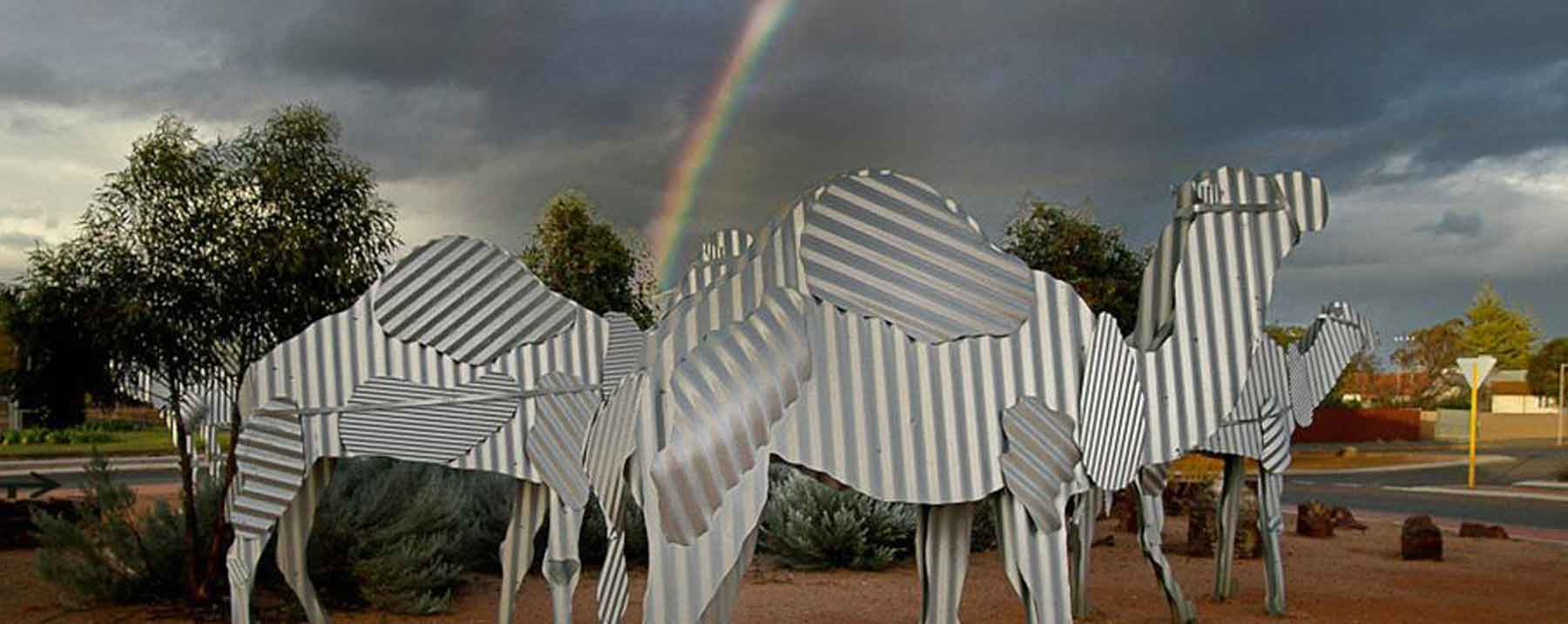 Corrugated Iron Camels